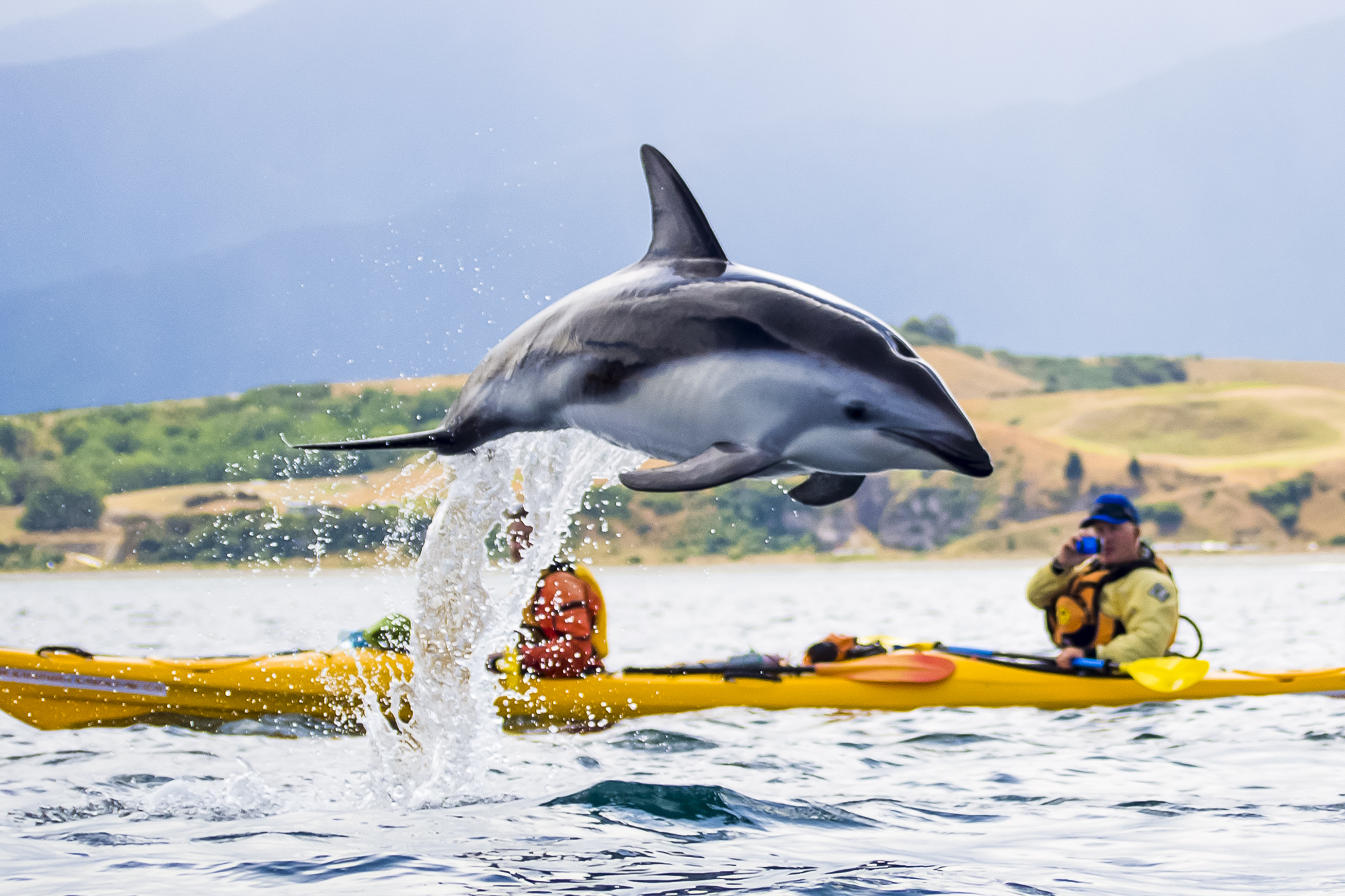 Sea kayakers have close encounters with the Fur Seals, Blue Pengiuns and Dusky Dolphins along the Kaikoura coastline.