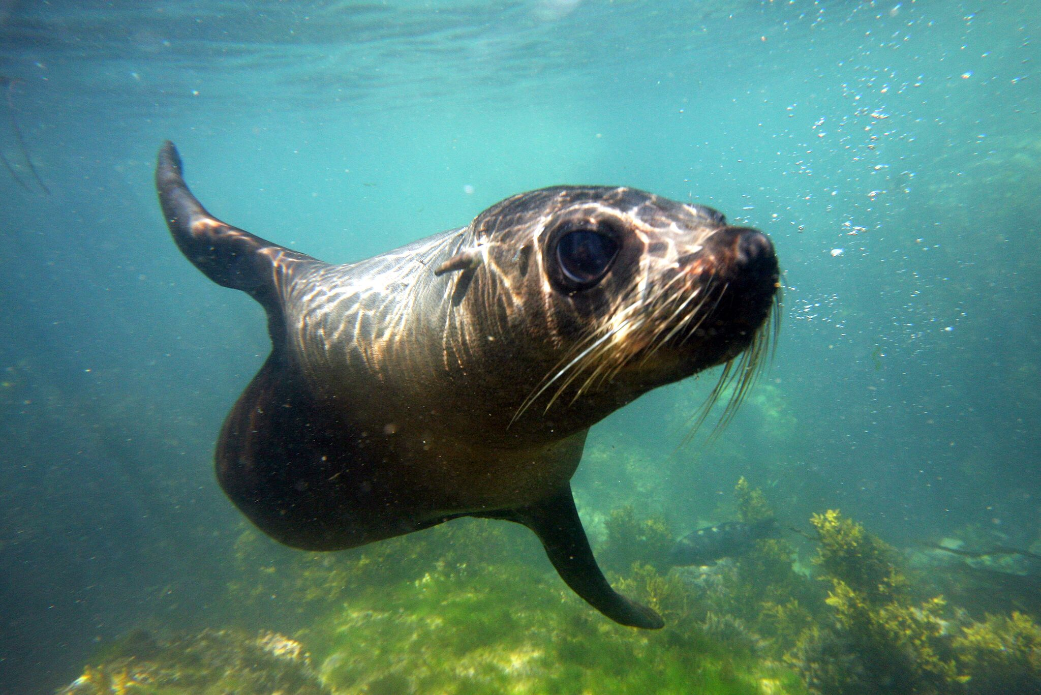 "Lonely Planet call Kaikoura Seal Swim  ""Top 10 Best Marine Encounter - Worldwide""."