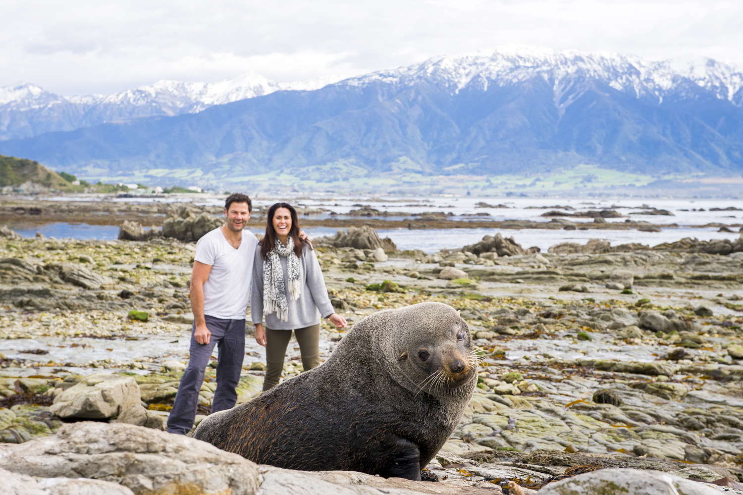 There maybe more fur seals then residents in Kaikoura.