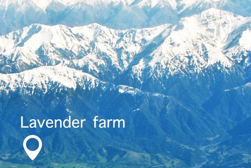 Lavender-Farm-Kaikoura