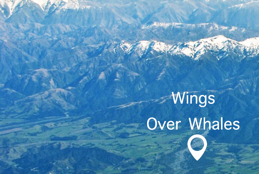 Wings-over-whale-Kaikoura