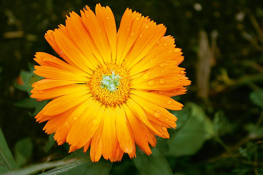 orange-flower-1349401 2.jpg