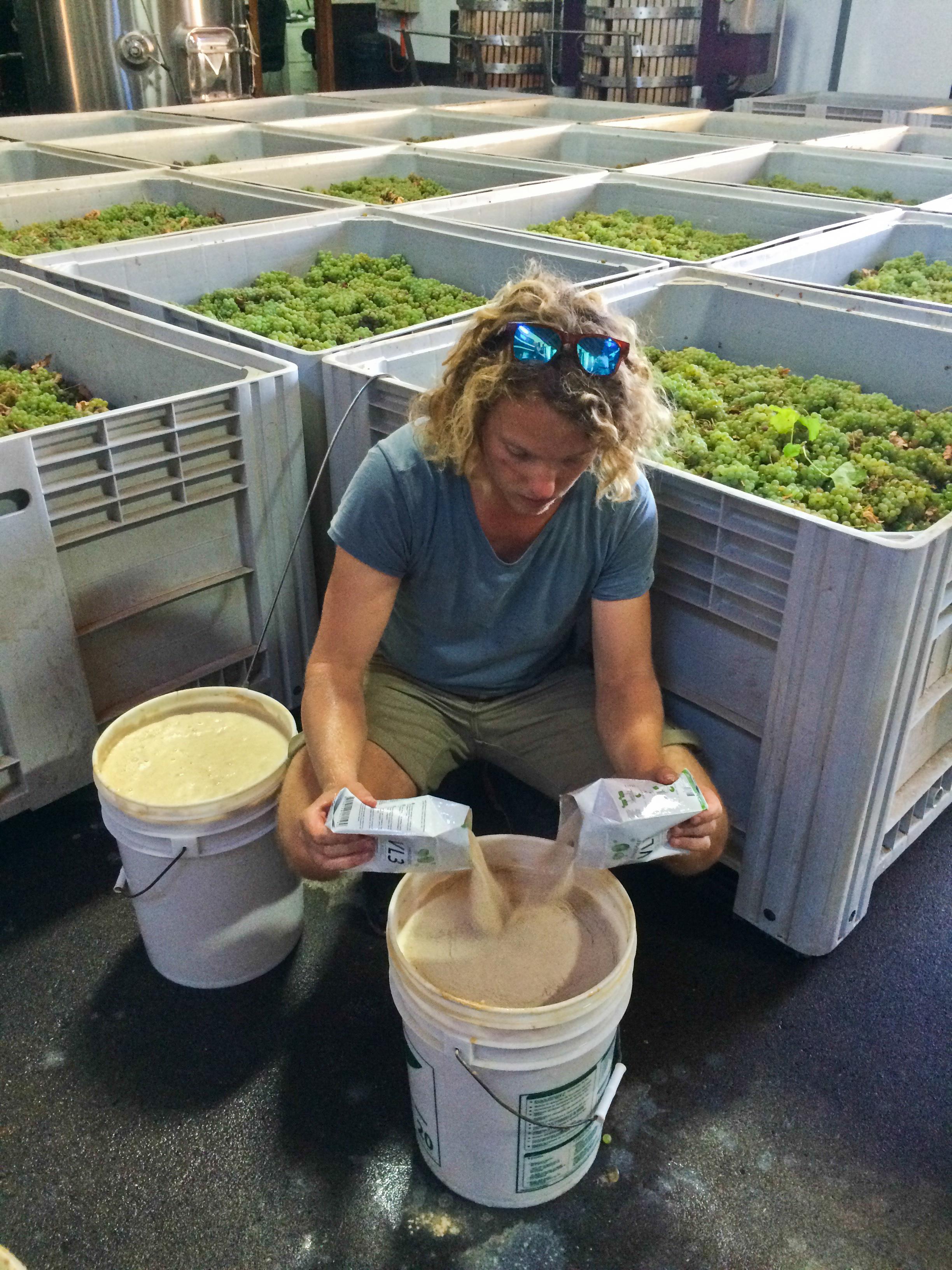 Jur maakt een gist cultuur om later bij de wijn te gooien.