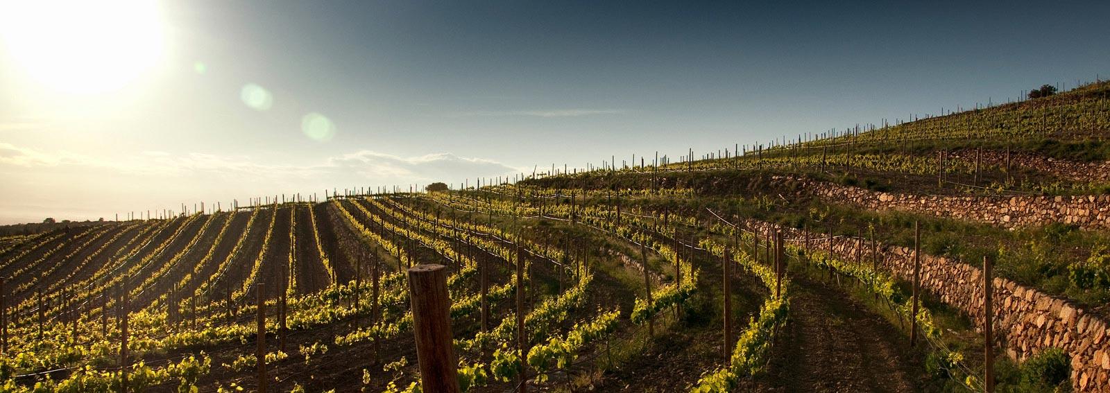 Een deel van De 25 hectare tellende wijngaard in Cap de Creus die wij zullen onderhouden