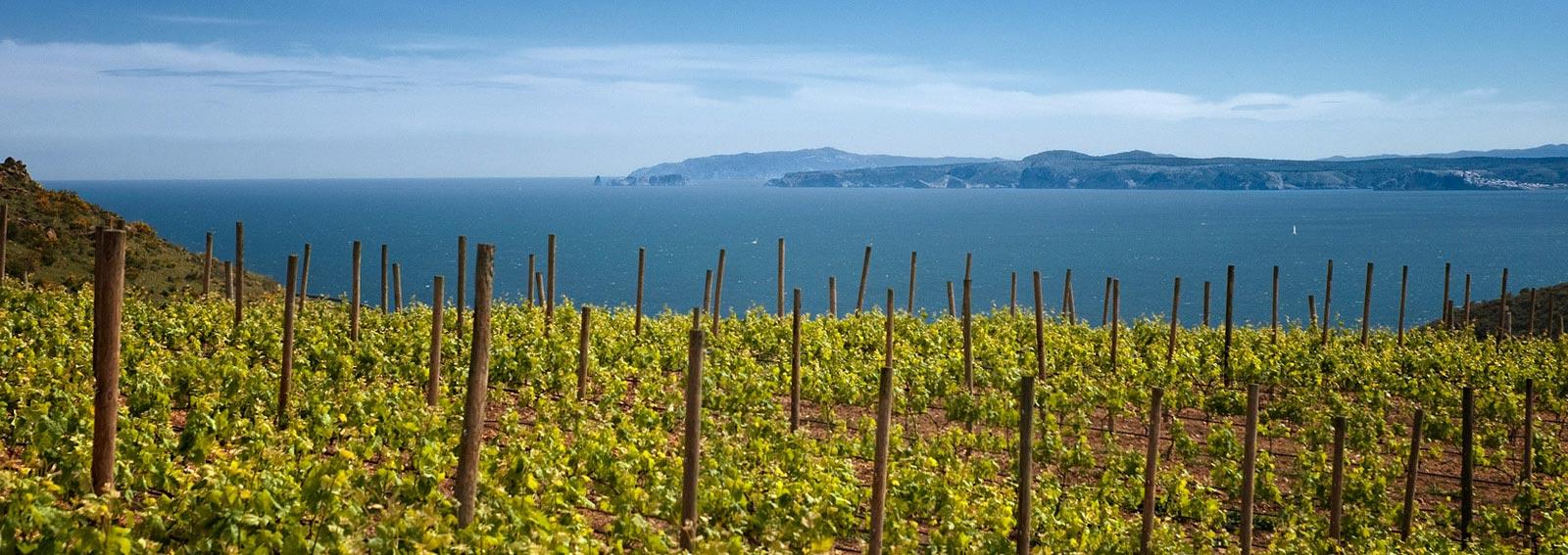 Uitzicht vanaf de wijngaard in Cap de Creus op de Middellandse Zee