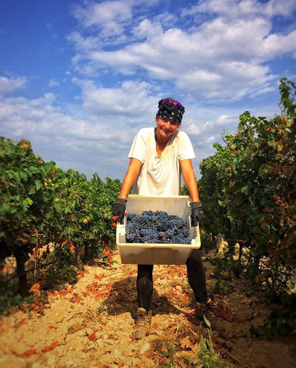 We chose to harvest the grapes early, for a racy acidity