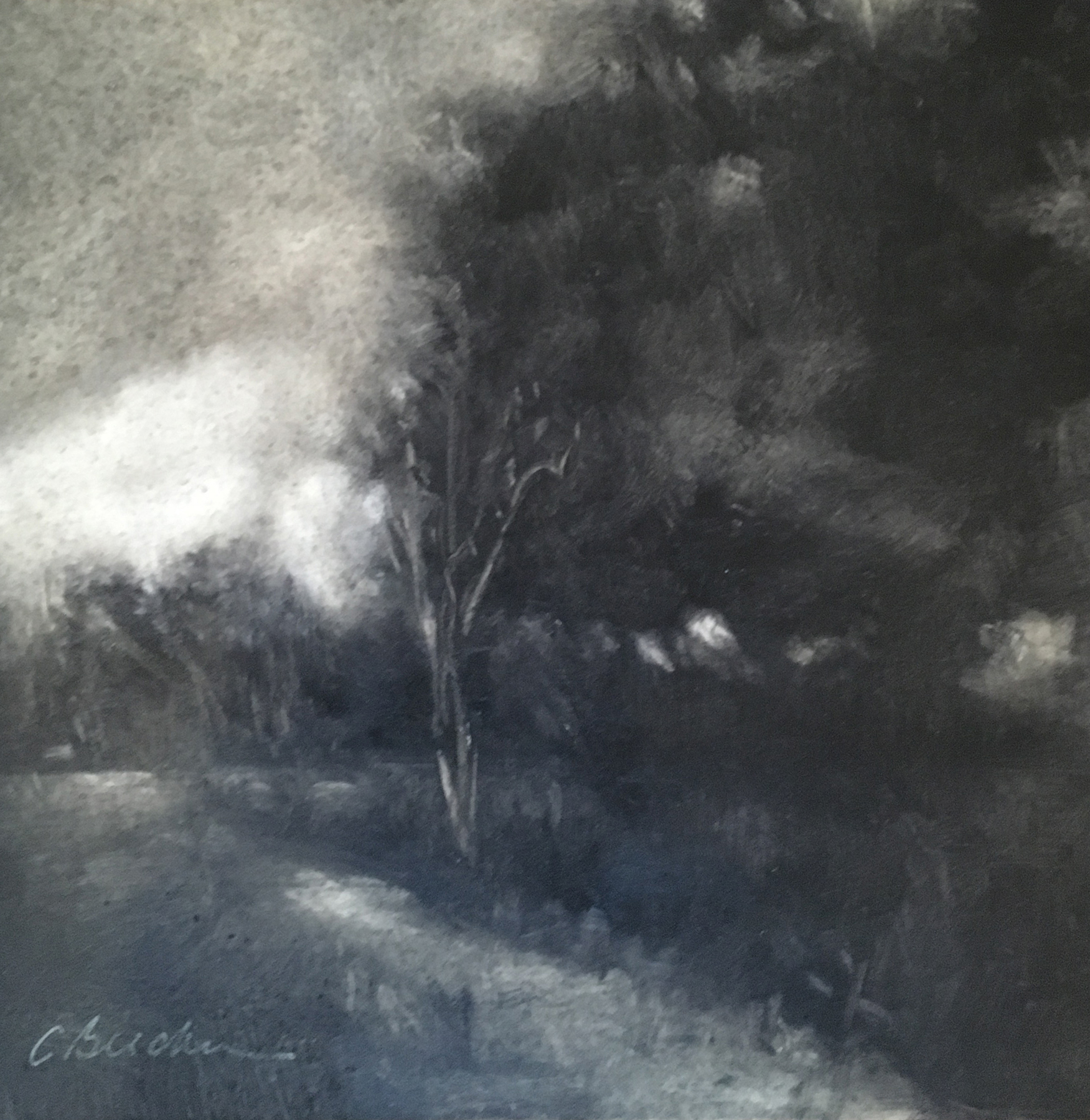 Black Birch   Oil on Panel 6 X 6