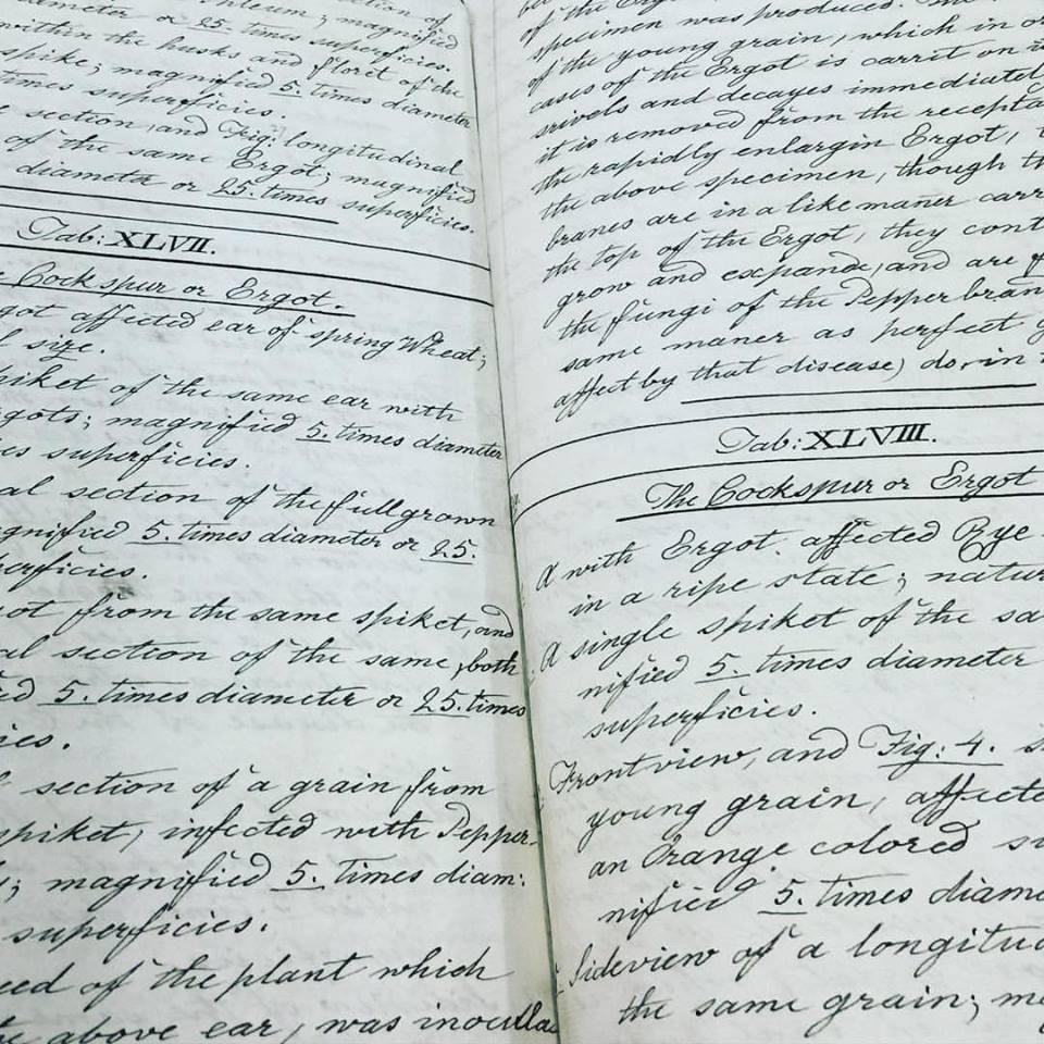 Franz Bauer handwriting