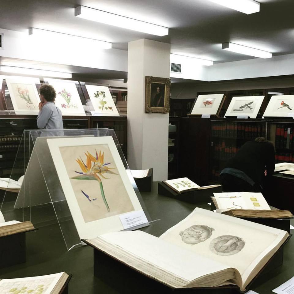 New Franz Bauer book - NHM rare books library open day