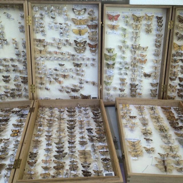 moth collection.jpg