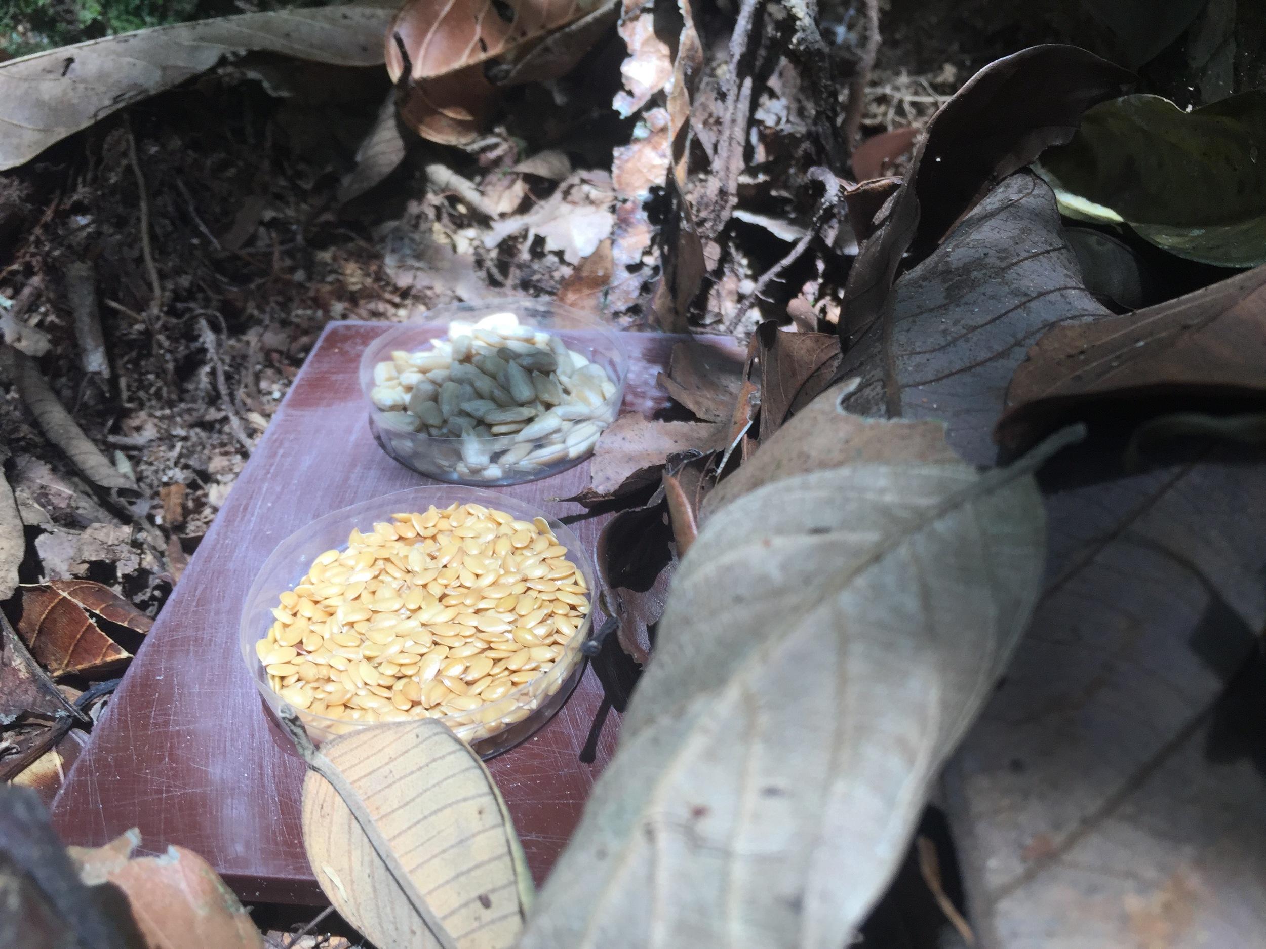 Sunflower and sesame seeds