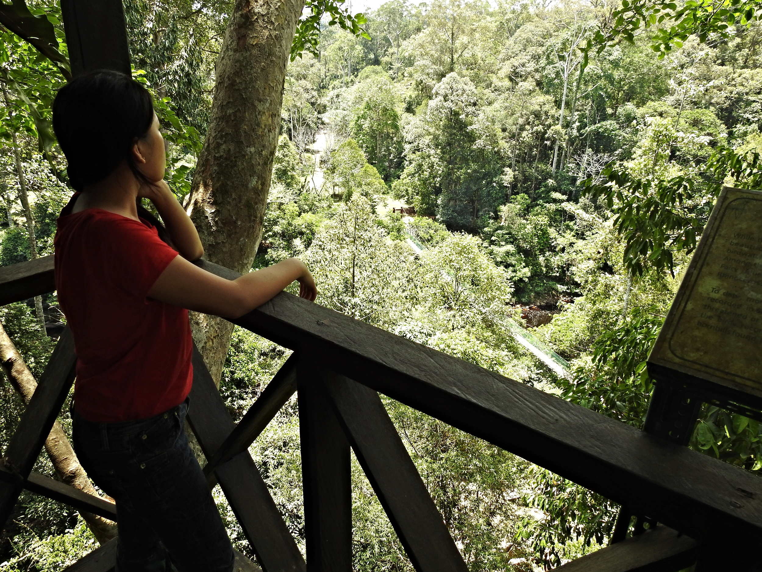 View from the canopy walkway