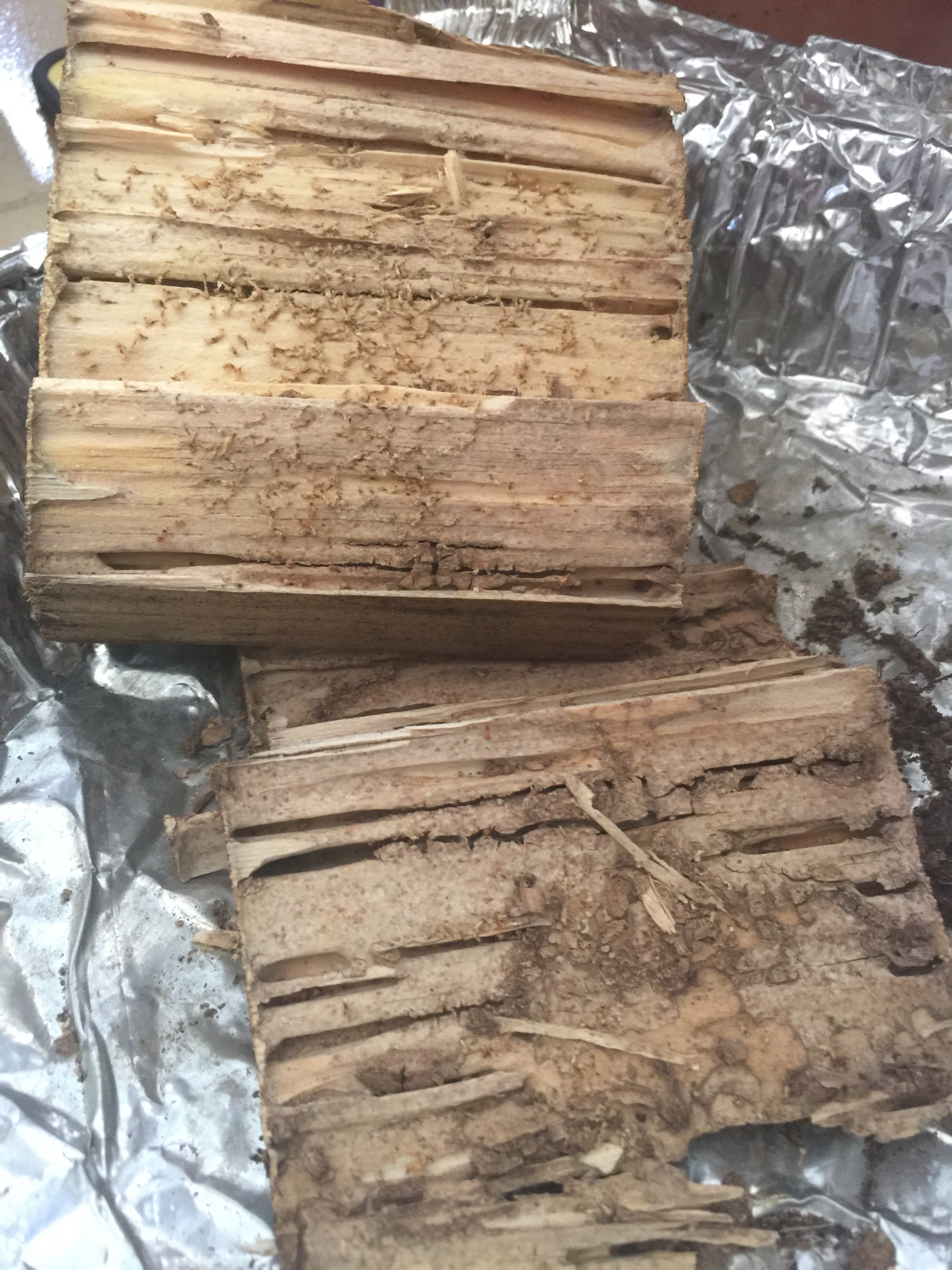 Wood block with termites