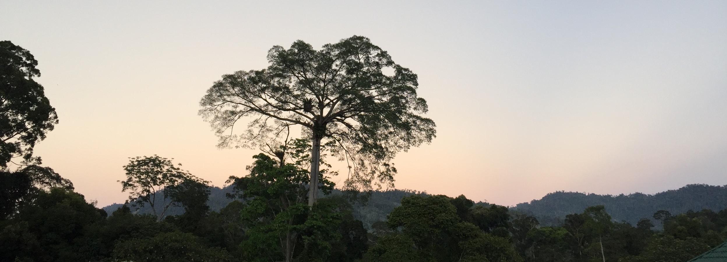 Sunset at Maliau