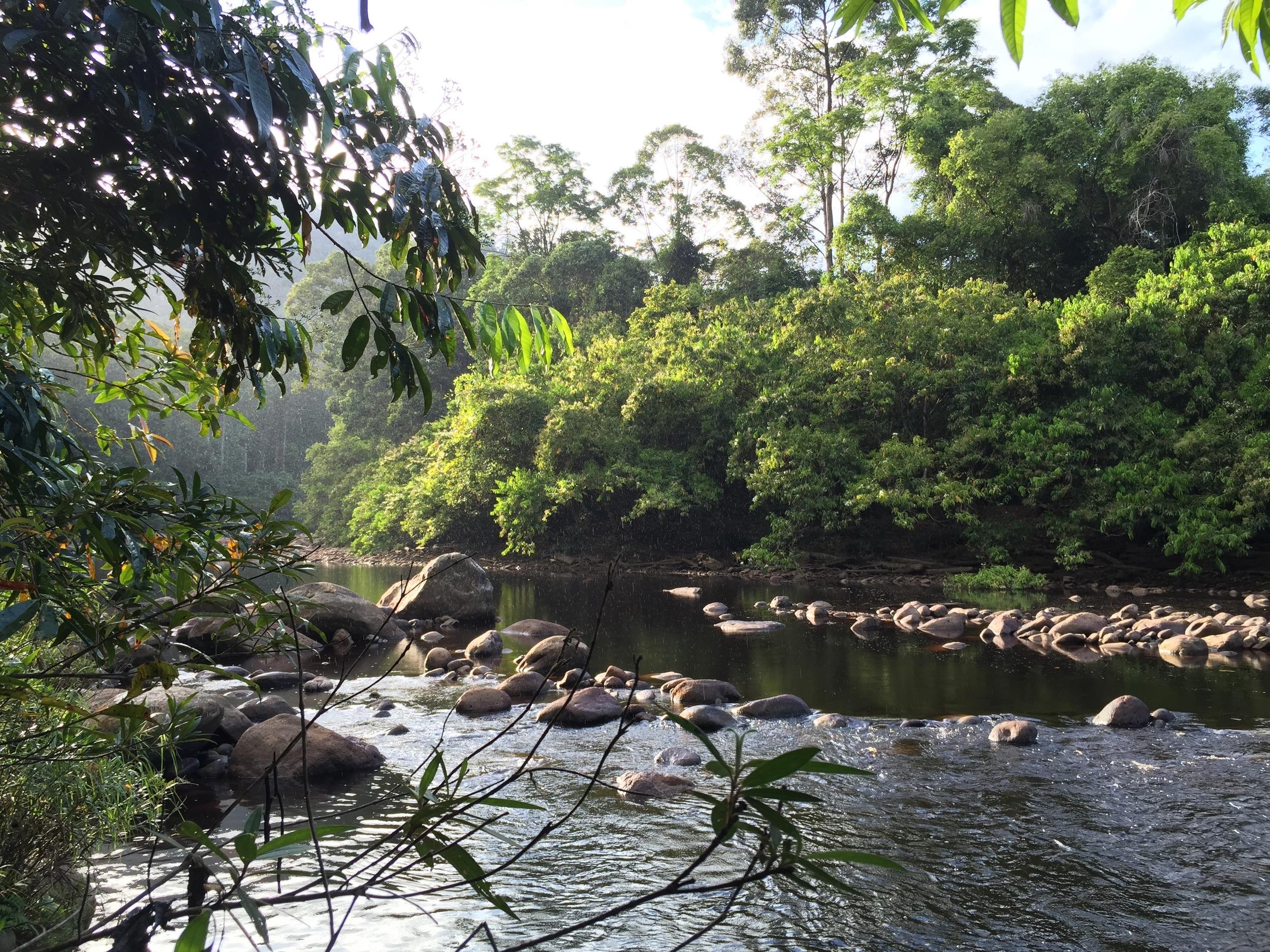 Sunday swim at Maliau river