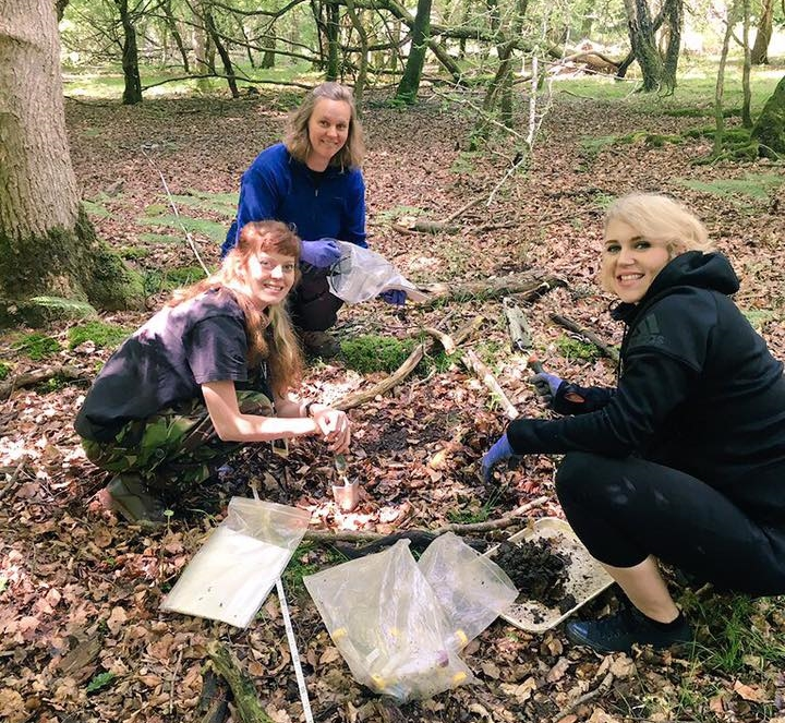 Field work in the New Forest