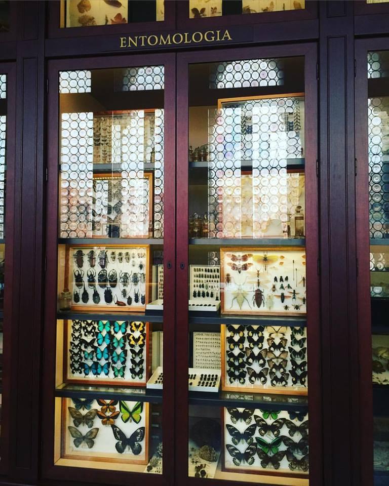 Beautiful entomology display