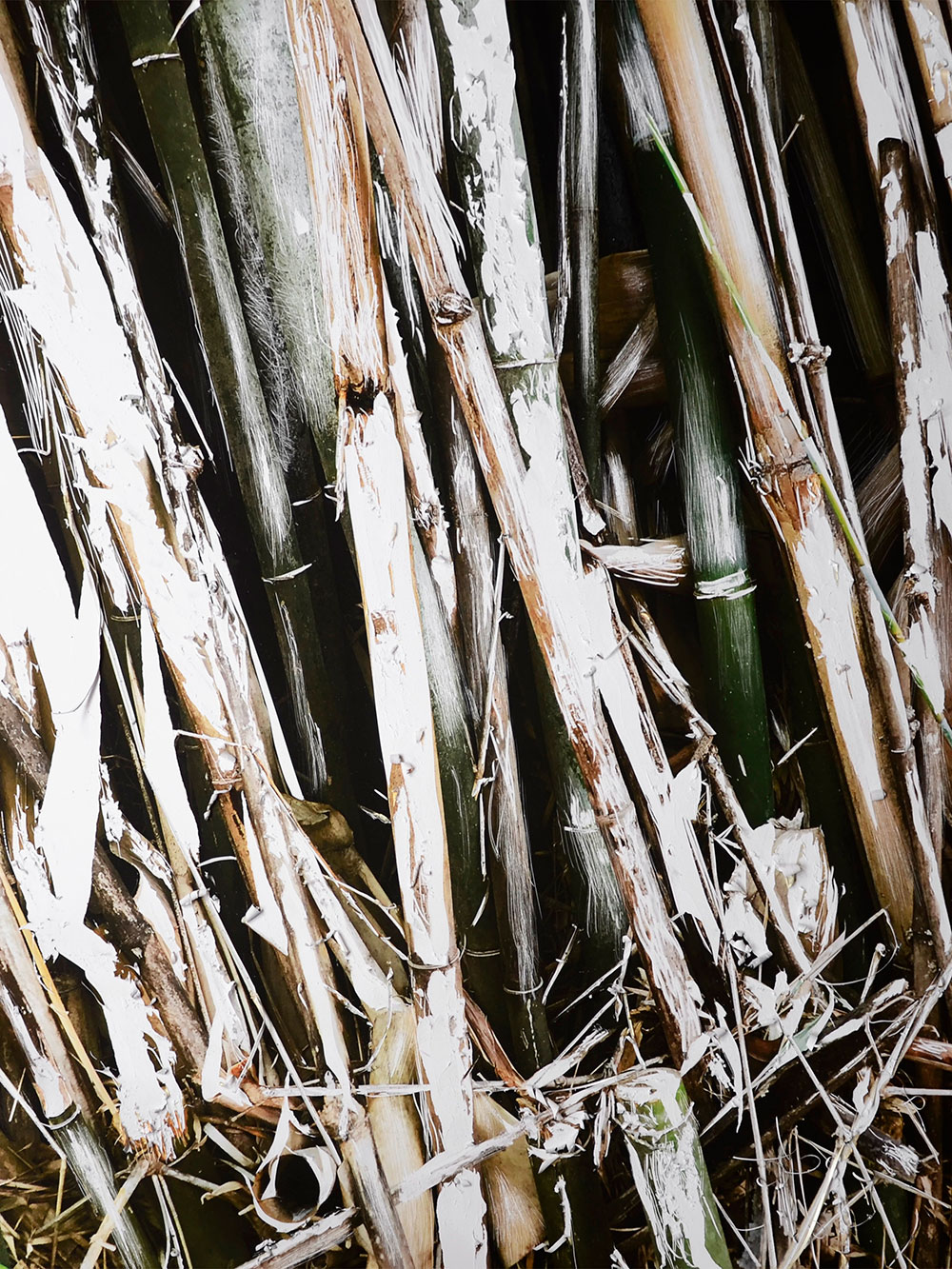 bambu verde