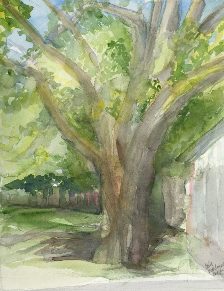 """Solitary tree viewed from tR's porch. #711, watercolor. 20"""" x 16"""" © beth vendryes williams"""