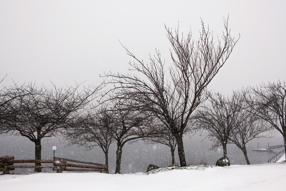100_29270-victoria-record-snowfall.jpg