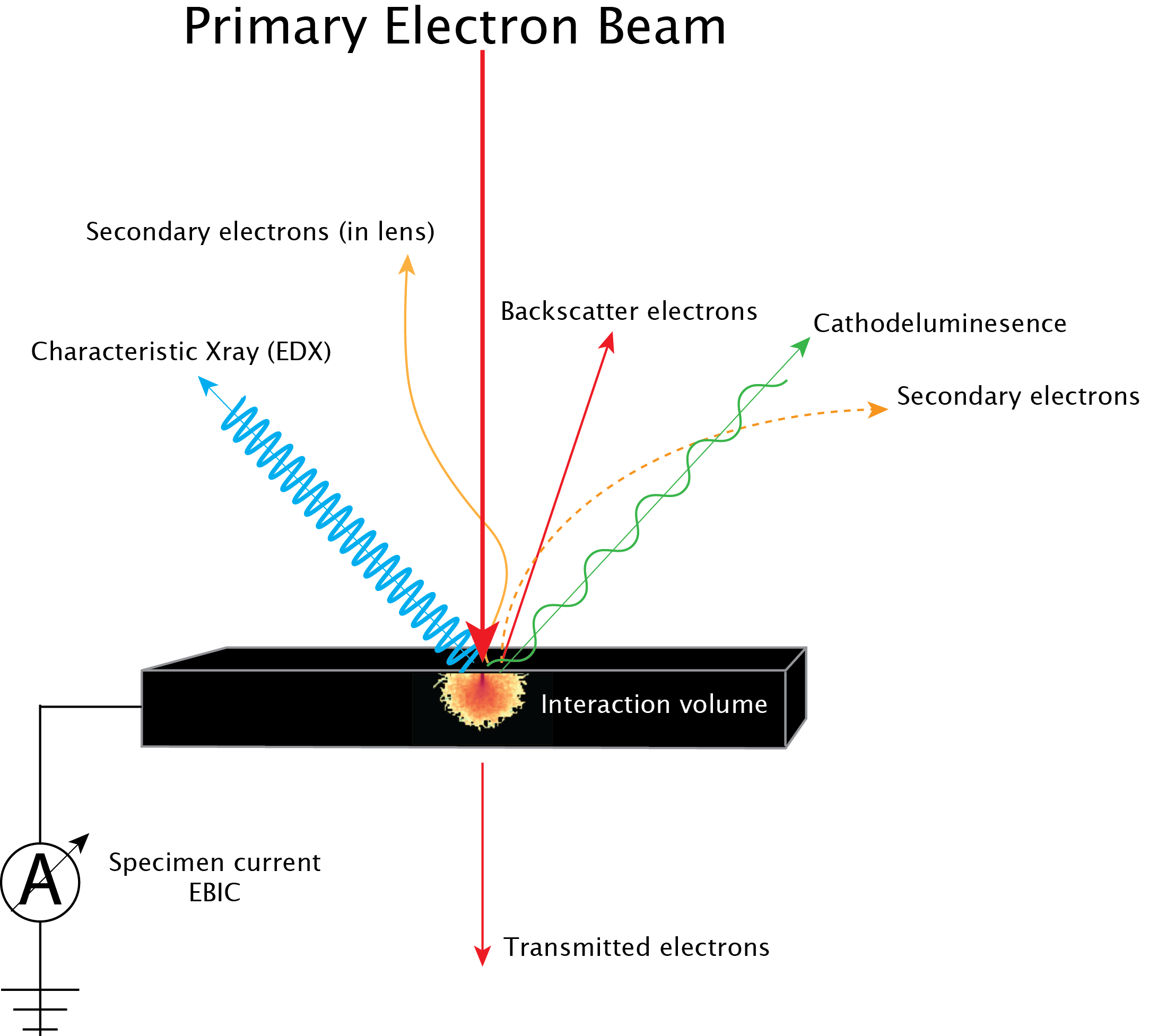 Primary e-beam interactions, SE, CL, Xray, BSE, EBIC