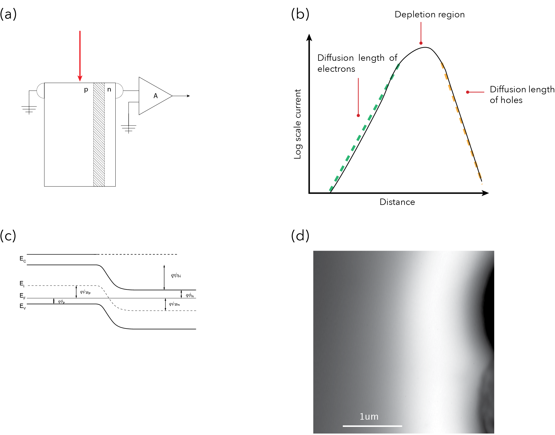 PN junction of solar cell  (a)EBIC configuration for cross-sectional images, n type side is connected to pre amplifier while p type side is connected to ground allowing for efficient carrier separation. (b) Log scale current response of profile extracted from (d) shows the diffusion lengths of minority carriers on either side of the depletion region. (c) Band diagram for PN junction with built in potential (d) EBIC image of the cross section of a PN junction of a solar cell.