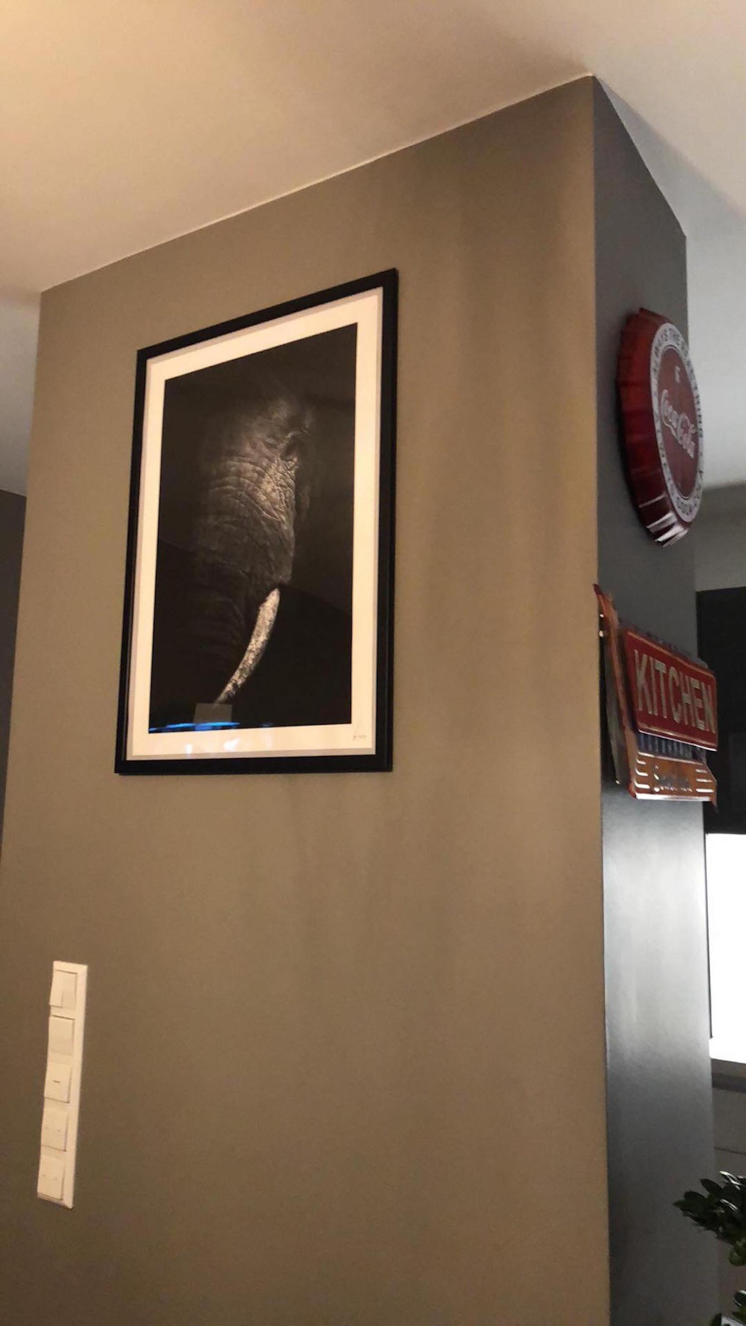 Elephant home client.jpg