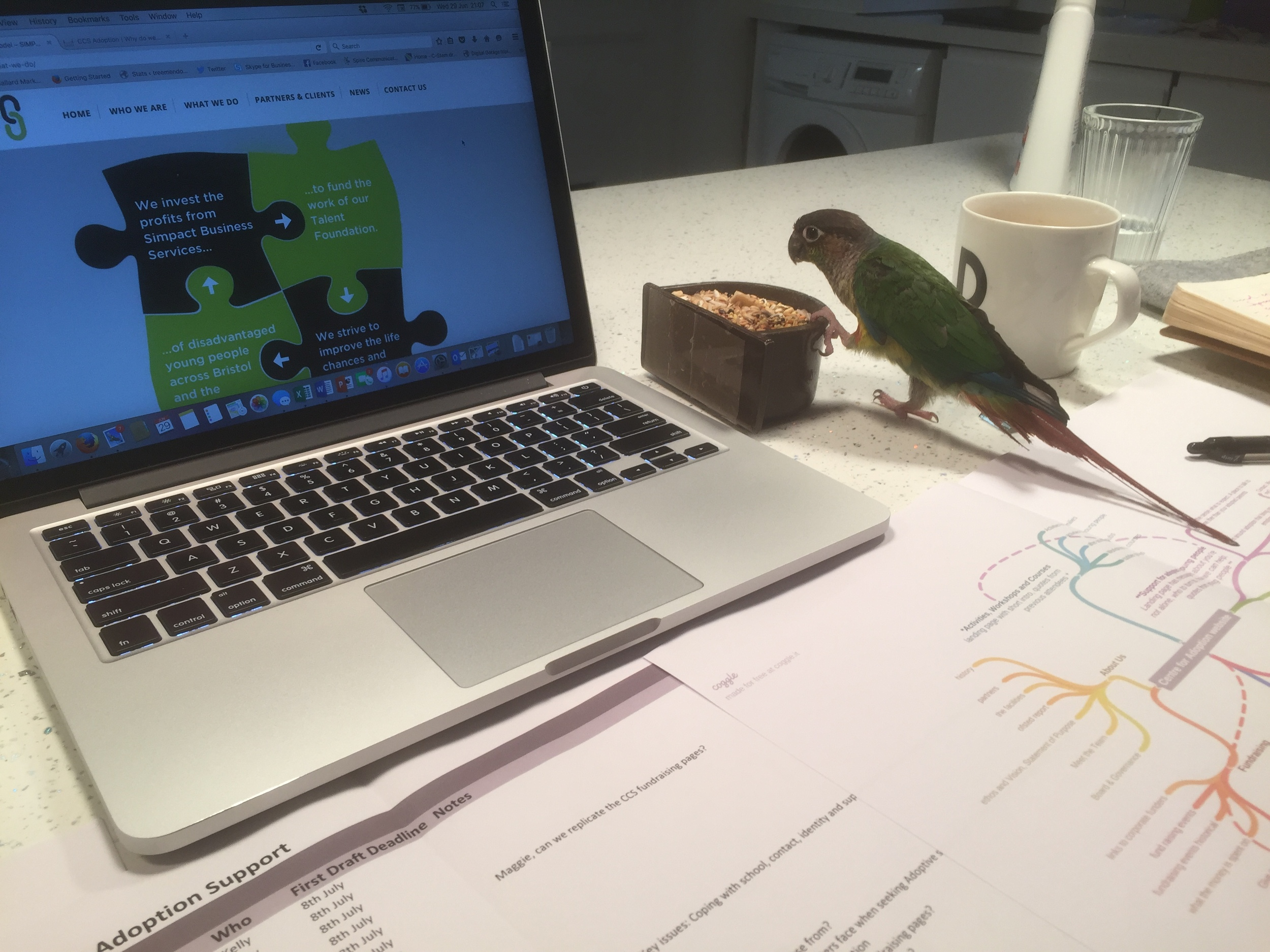 Some days I meet in coffee shops, other days I meet in Government buildings with high security.   Last week I met Jody at  Digital Fire  personal HQ for an 8pm meeting.  We were joined by Tiki the parrot.  Thank god I'm not scared of birds…as he flew from the lounge to join us in the kitchen.  Working with my new mind mapping tool from  Coggle.it  for project managing a new website.  Simplifying my sometimes disorganised thinking. Extremely important when you have parrots flying around.