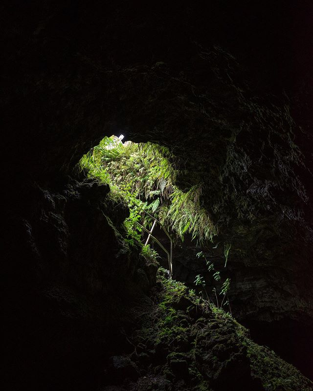 While exploring this lava tube, Shannon and I were hoping to spot one of the endemic planarians dwelling within. Apparently, this cave system is one of the only places they've been observed descending from the cave ceiling to hunt their prey—creepy but cool!  Planarians are a kind of carnivorous flatworm, by the way, beloved by scientists because of their unique physiology and abilities. For instance, if they lose any part of their body, each severed piece regenerates into a complete new organism! . . . . . #natureaddict #thecritterhaven #animalworld #voyaged #wondermore #travellife #traveladdict #neverstopexploring #earthoutdoors #exploretocreate #discoverearth #wondermore #roamtheplanet #stayandwander #fantasticearth #earthscope #folkscenery #hikingtheglobe