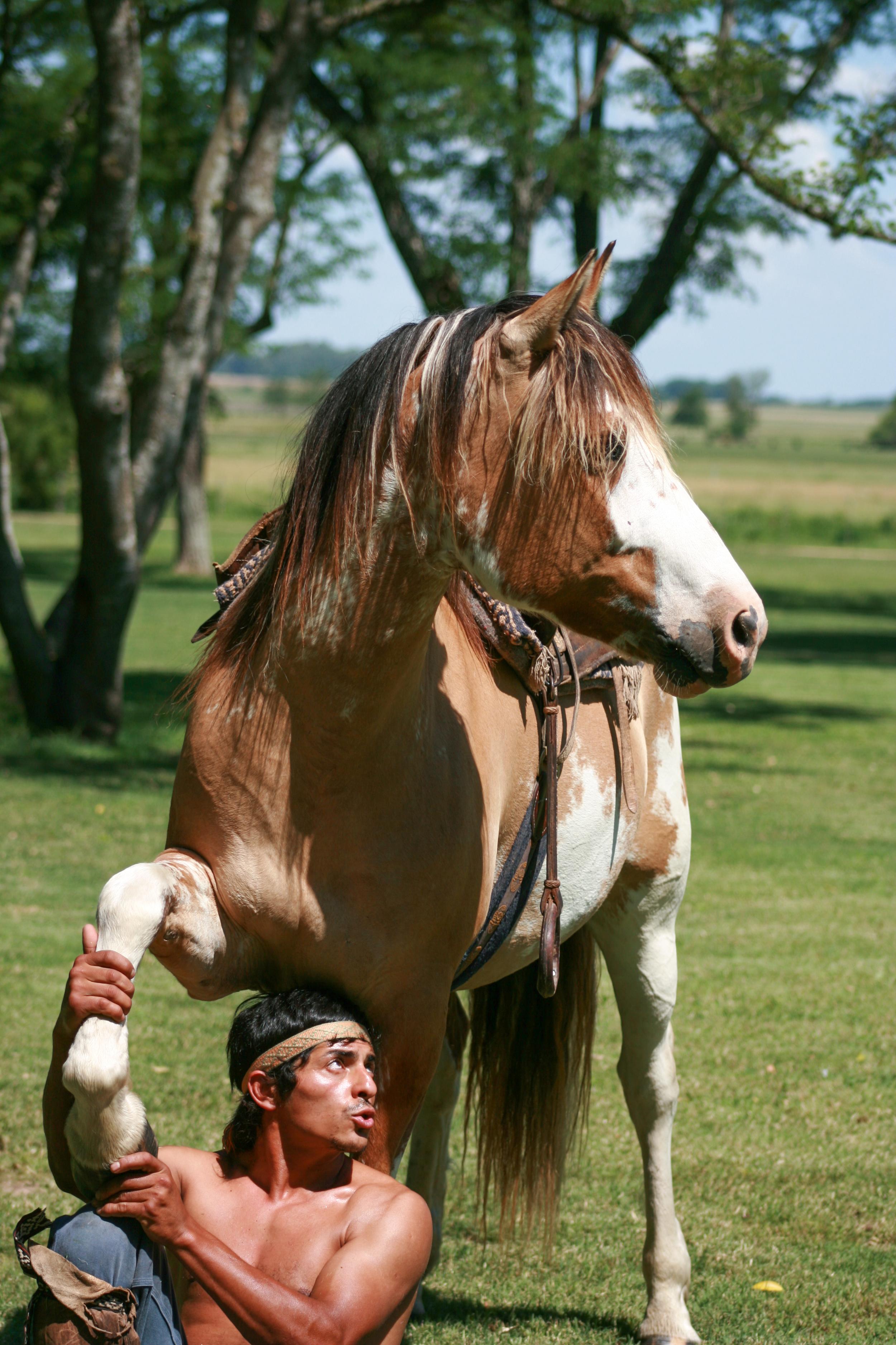 Argentina_Horse_Whisperer.jpg