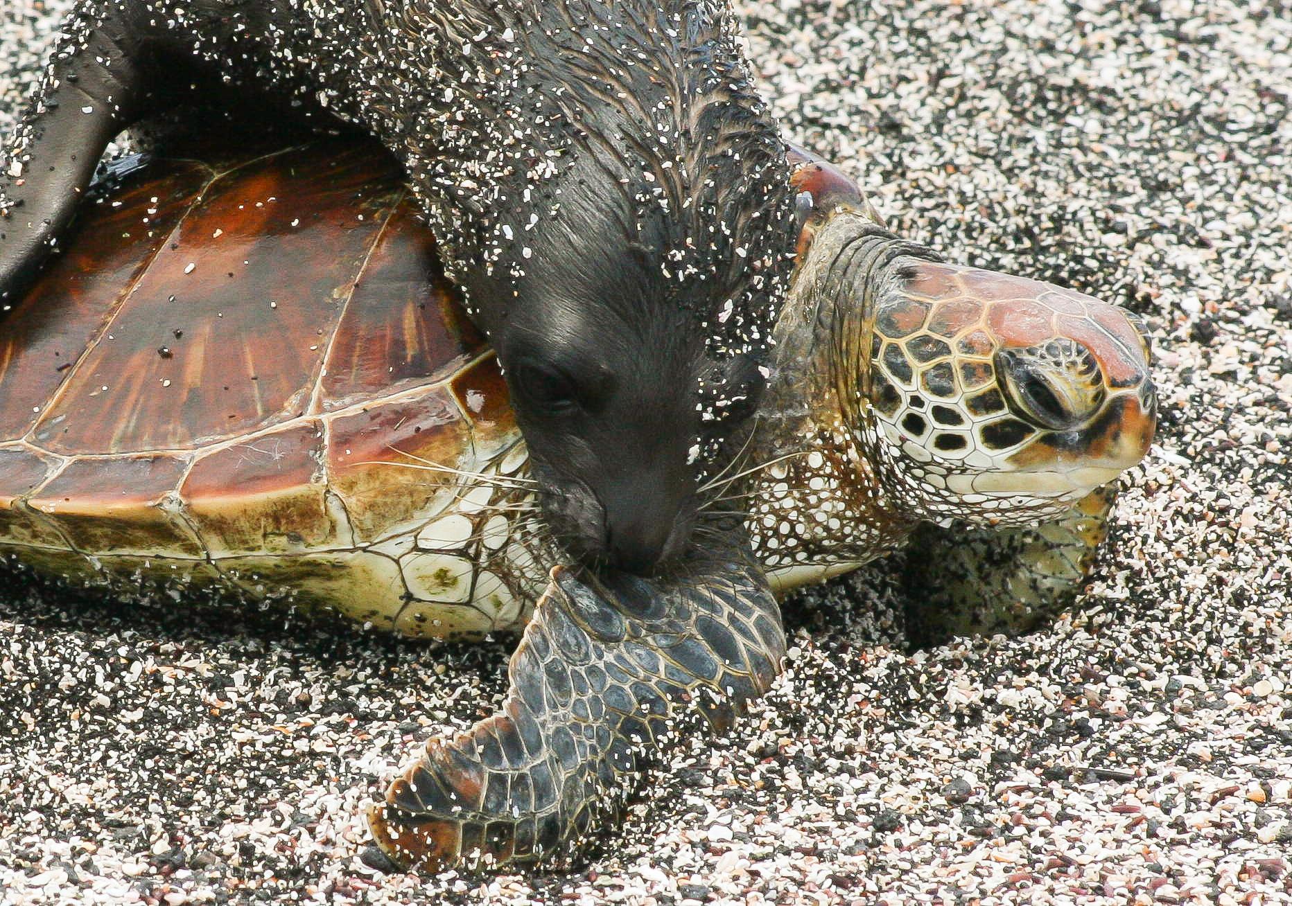 Seal_Turtle_Hug.jpg