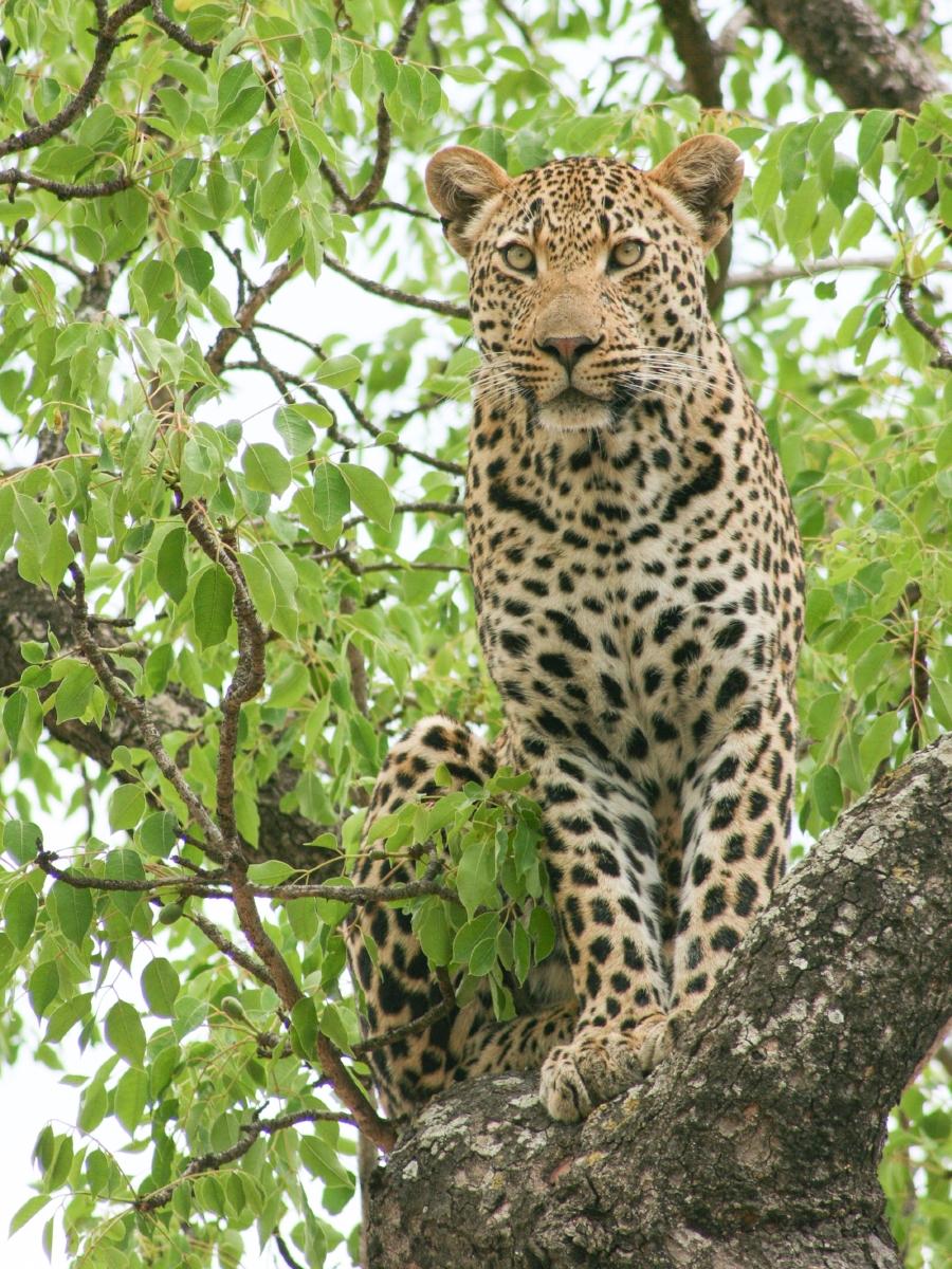 Safari Travel Planner