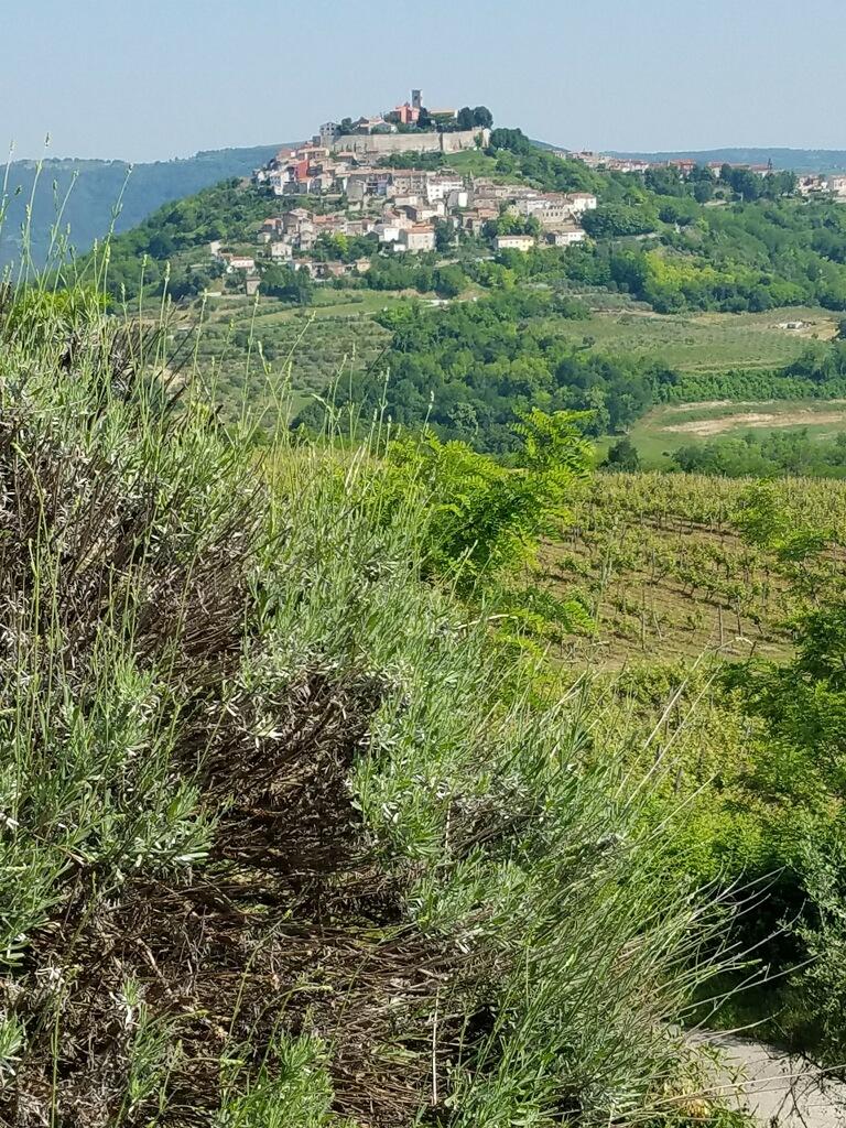 Slovenia wines.jpg