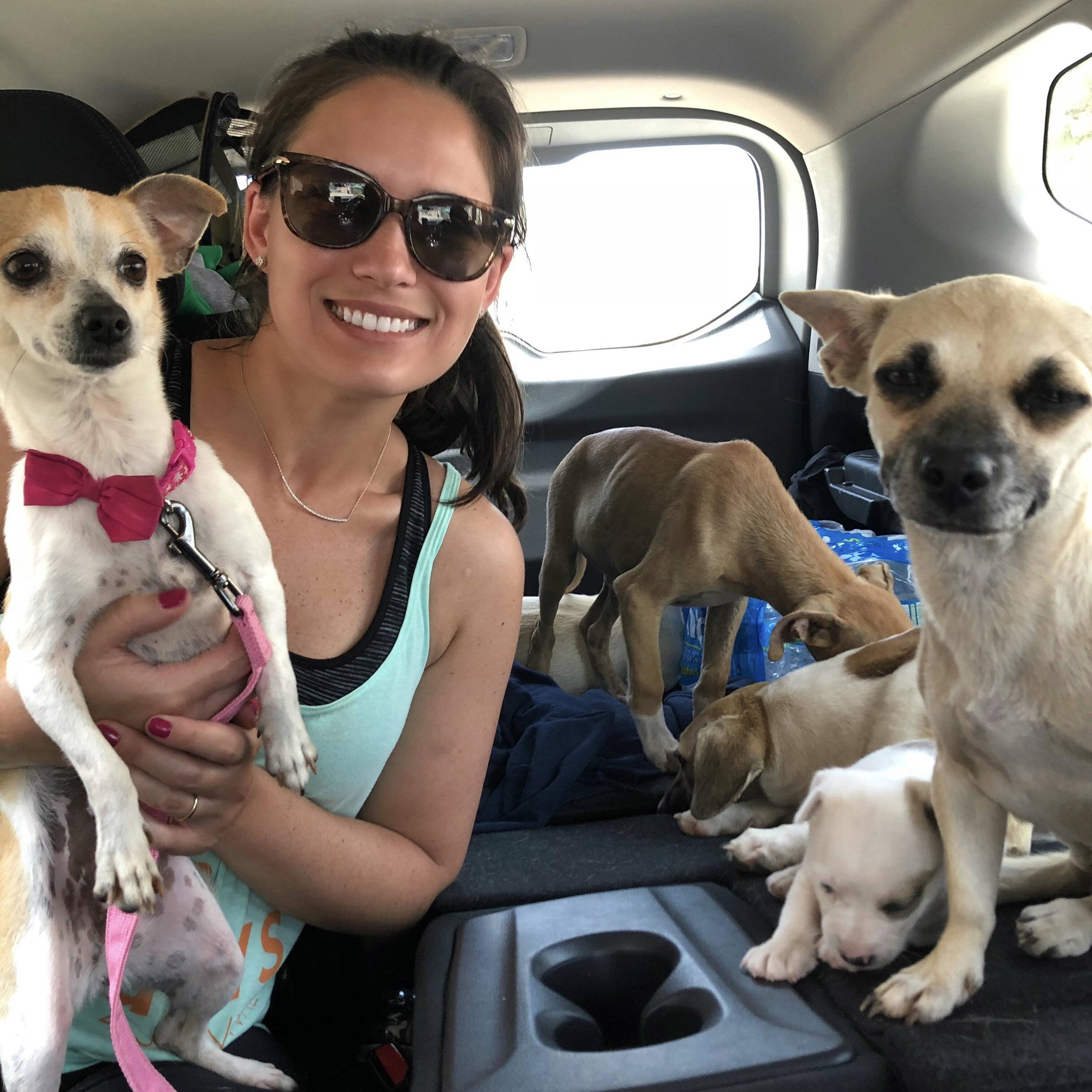 ON THE GROUND IN PUERTO RICO RESCUING PUPS!