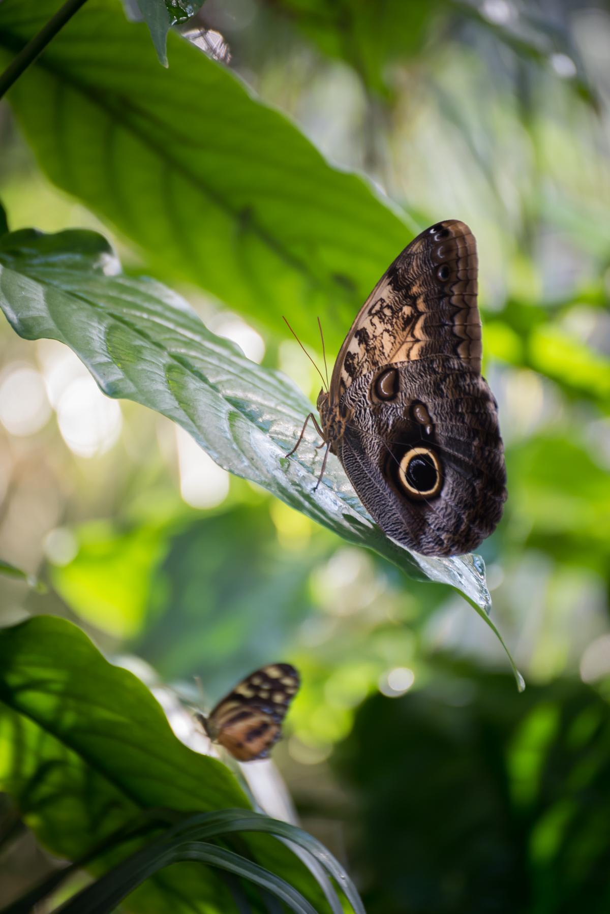 butterfly-9.jpg