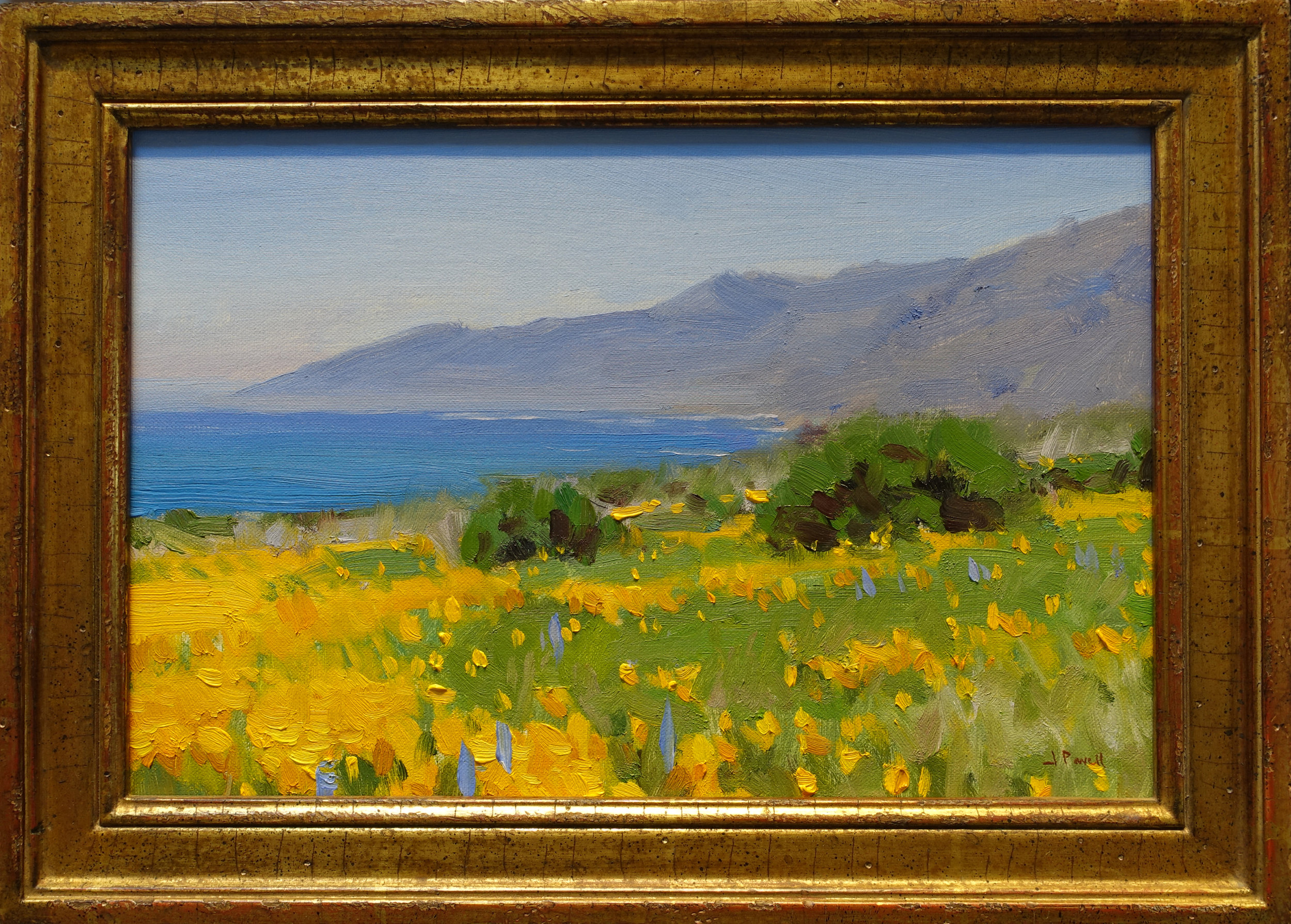 big sur poppies 8x12 $1700.jpg