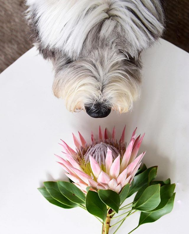 HAPPY SPRINGTIMEEE ✨🌸 | 📸 @two.dulux.dogs