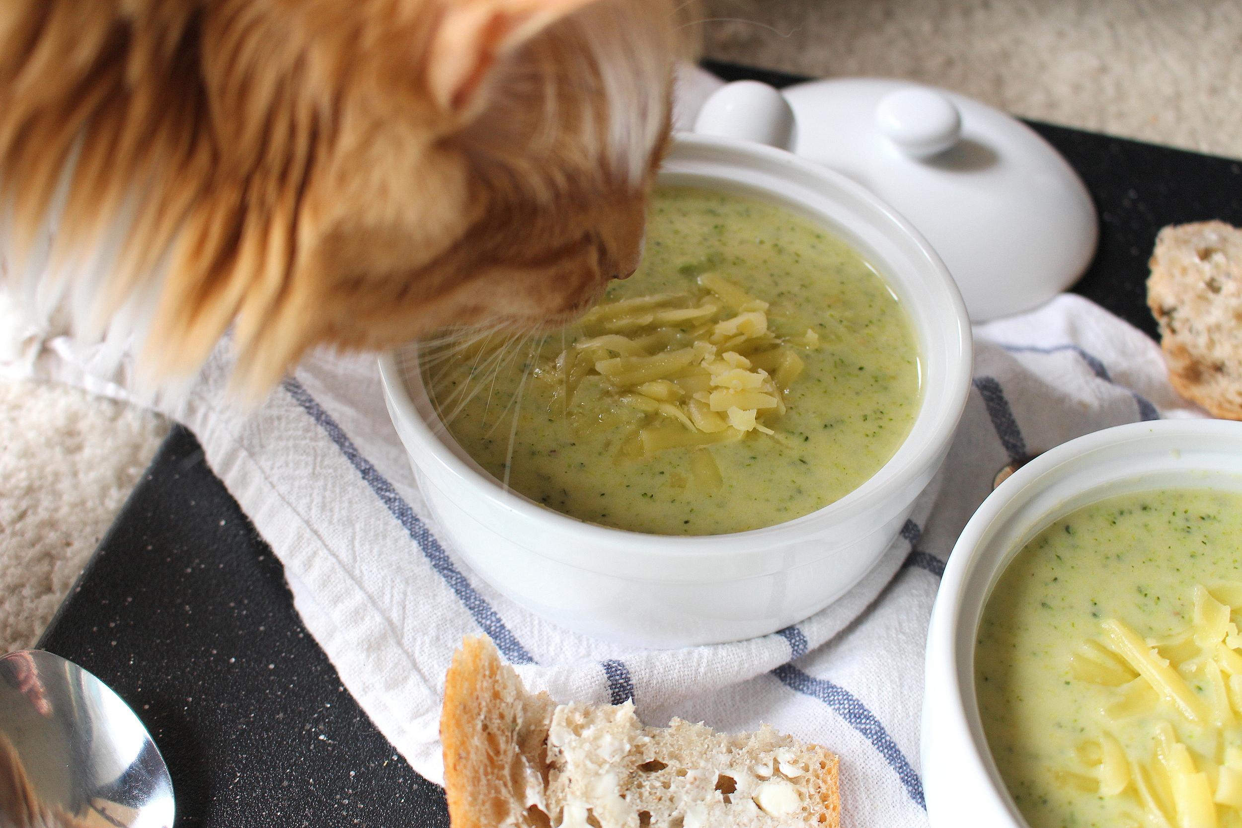broccoli cheddar soup-3