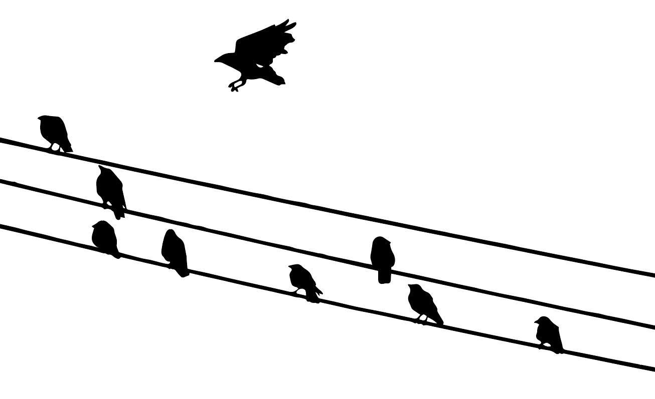crowsonwires.jpg