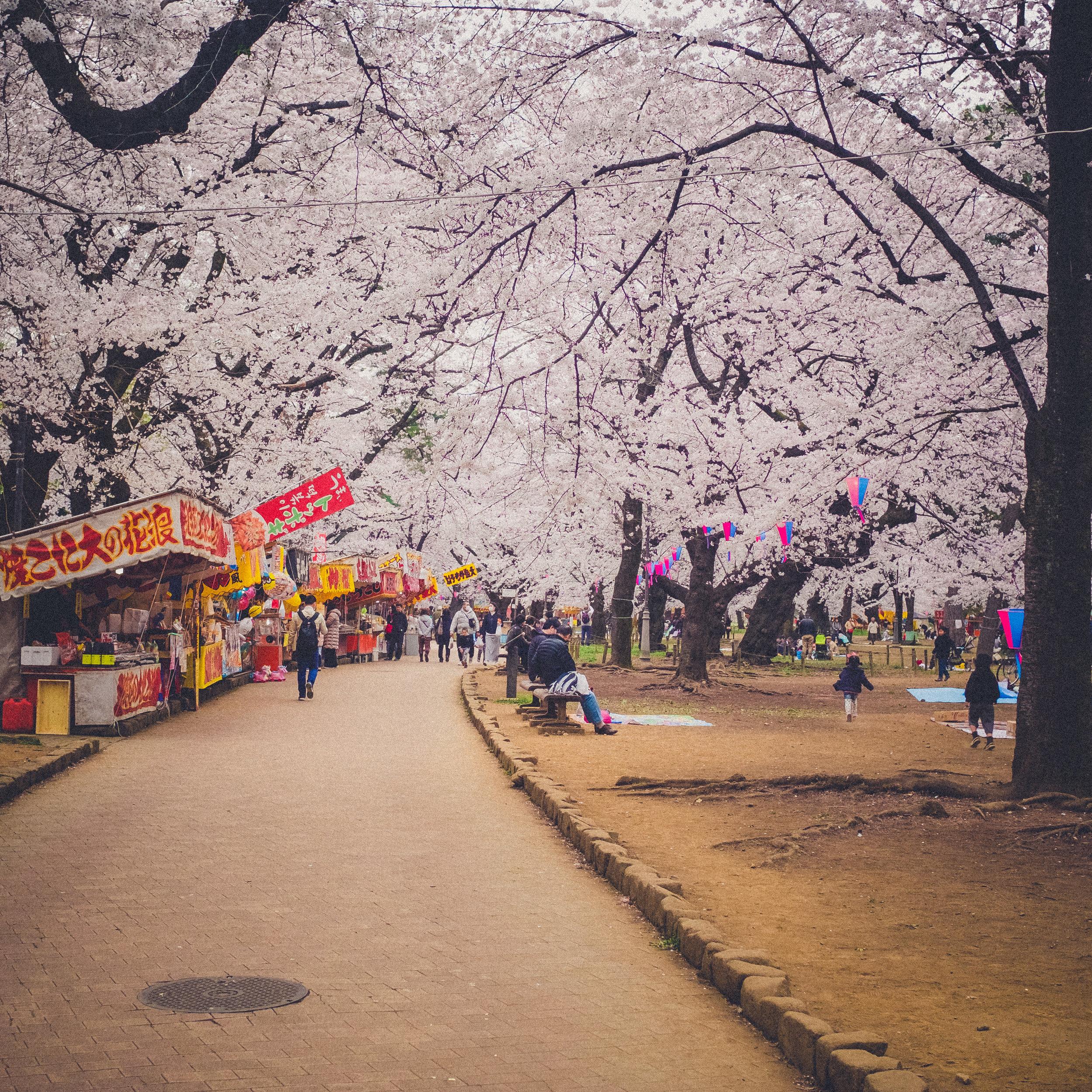 Omiya Park - Saitama