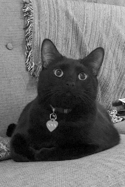 SUPERNOVA   Queen bee/muse, resident feline, master of disdain, collector of fat