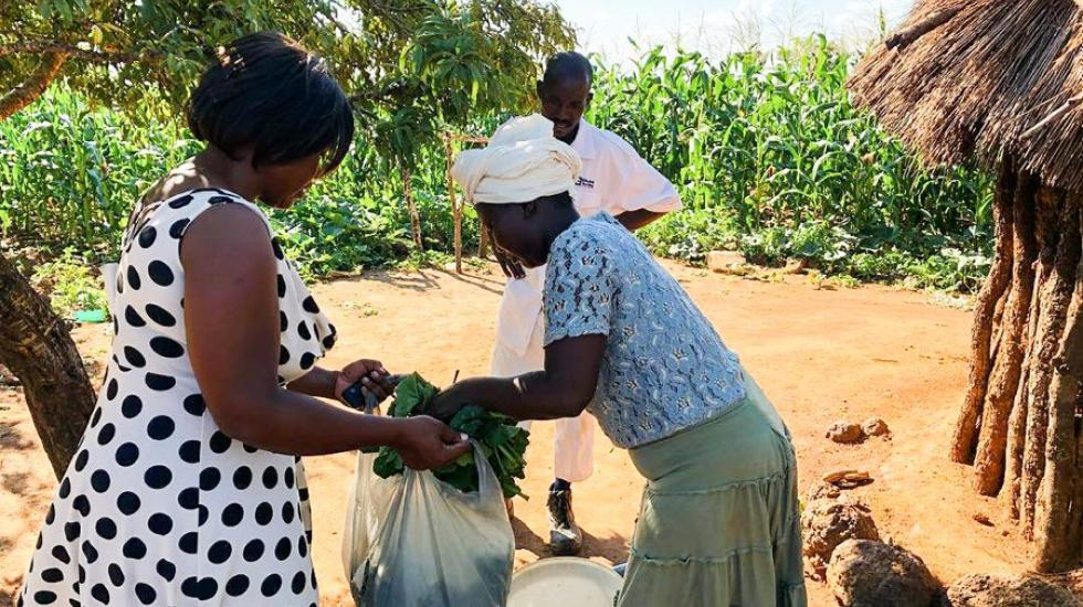 Sjølvhjelpne : Både barneheimen og Håp-familiane blir stadig meir sjølvhjelpne. Grønsakhage og frukttre bidreg til inntekt og sparing. (Foto: Privat)