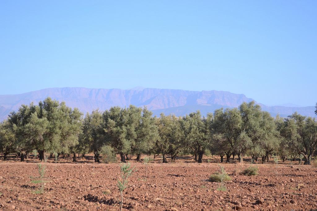 141020_Moroccan Nursery Visit_Blog_11.jpg