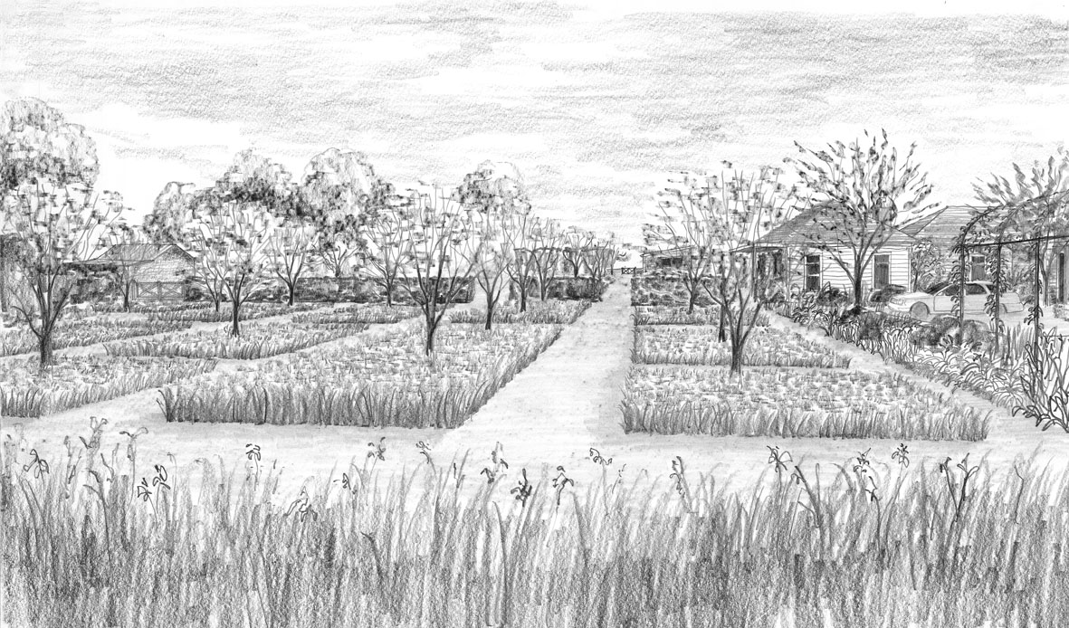 orchard perspective.jpg