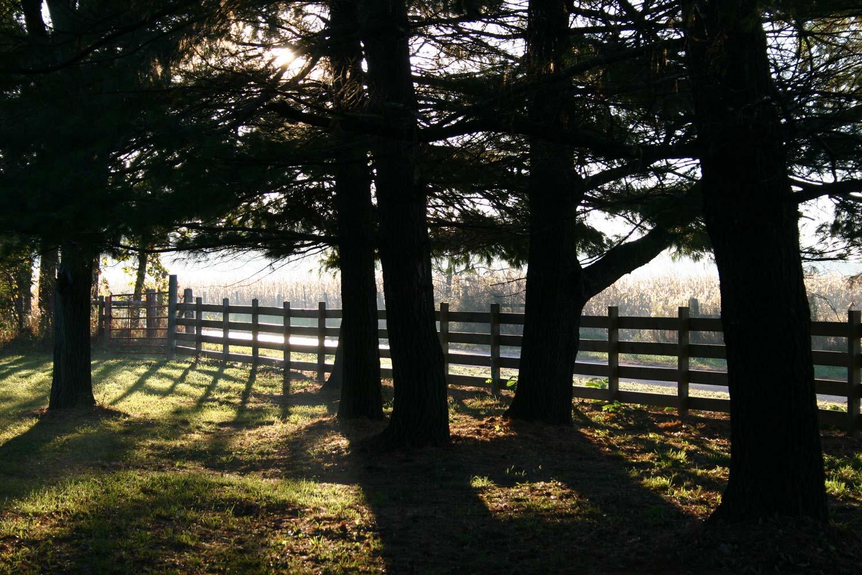 morning light, east garden