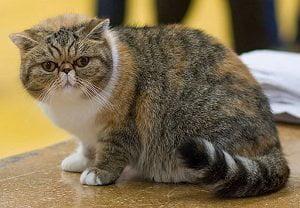 A furry cat or a fluffy one? Courtesy of  Care.com