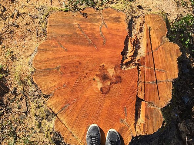 Some amazing tree stumps. One friend said it's like removing history to make way for the new.