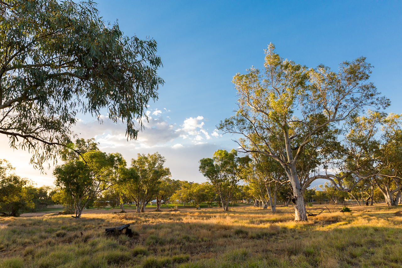 Beautiful gumtrees grow in and around the river