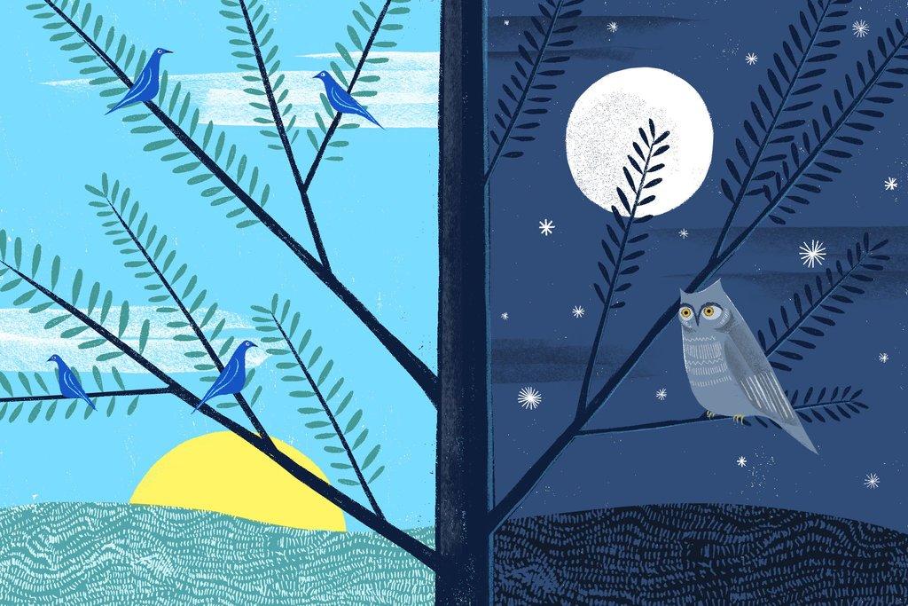Morning Lark or Night Owl?