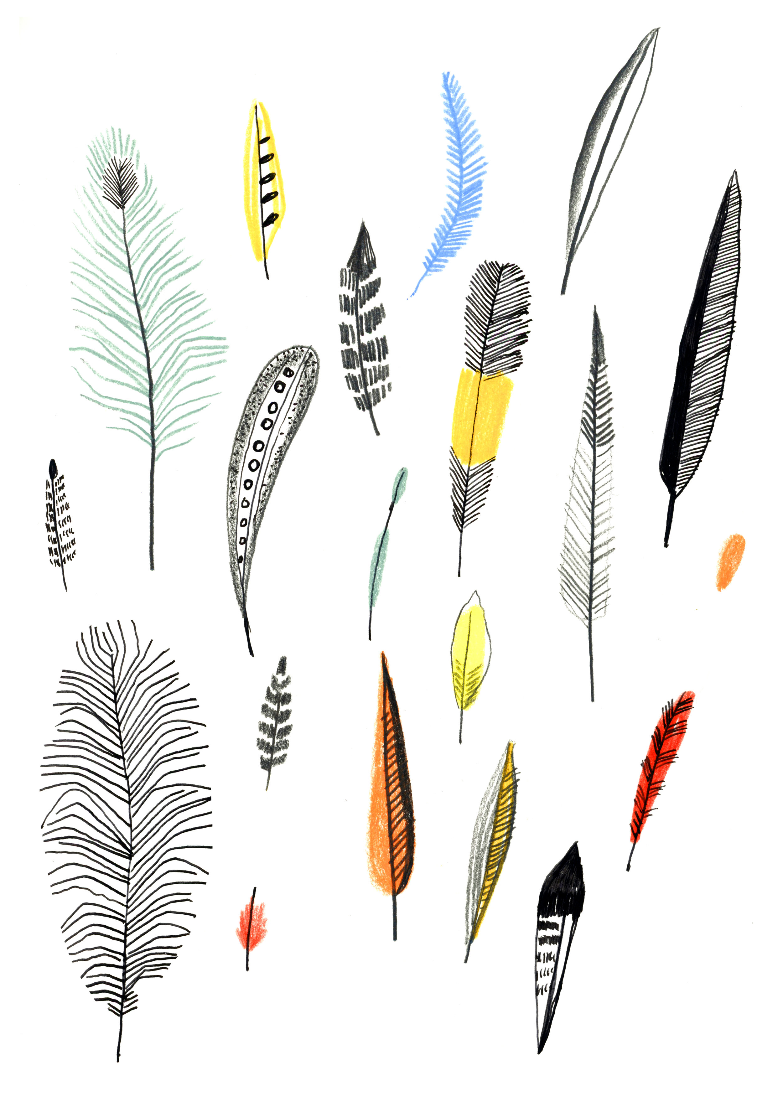 Feathers from Museum of Natural History , pencil and pen on paper, 2015